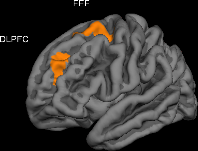 Видеоигры могут развить кору головного мозга  - Изображение 1