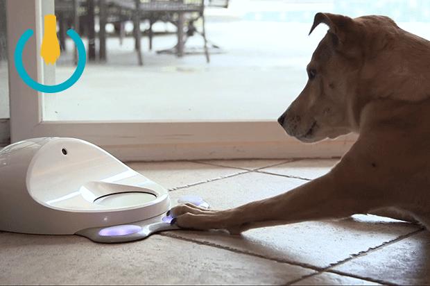 Консоль для собак вышла на Kickstarter . - Изображение 1