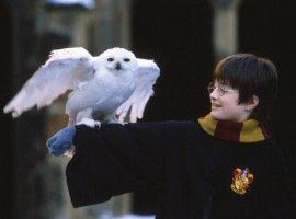 Опрос: какой фильм вовселенной «Гарри Поттера» вылюбите больше всего?