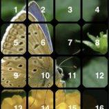 Скриншот Abundant Puzzles: Nature – Изображение 4