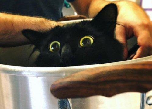 В Портленде живет кошка, которая вписывается в любой фильм. Она может даже напугать хоббитов!