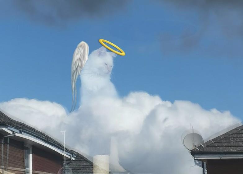 «Божественная кошка»: из-за оптической иллюзии кот воблаках стал мемом | Канобу - Изображение 9431