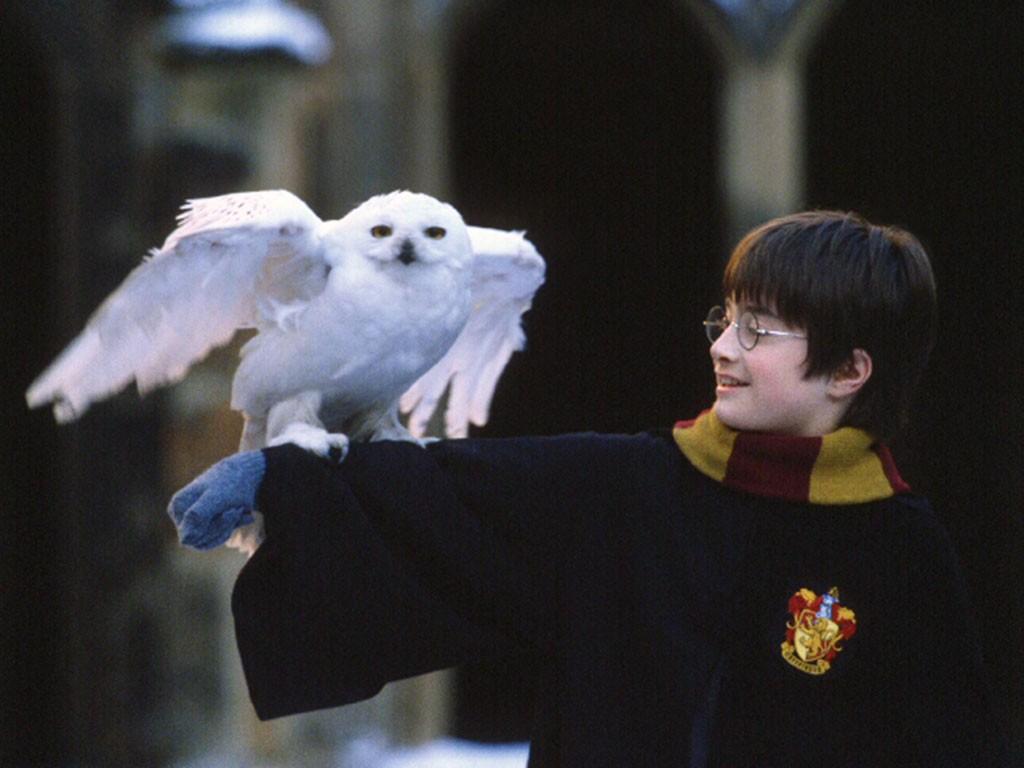 Фильмы и сериалы с Дэниэлем Рэдклиффом (Daniel Radcliffe) - топ лучших ролей актера | Канобу - Изображение 3519