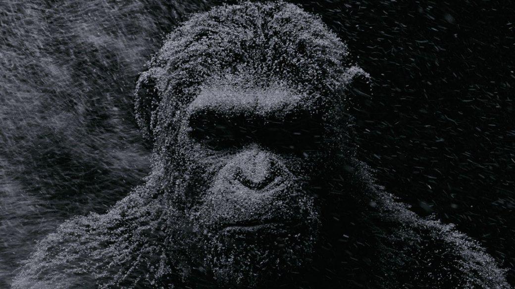 13 июля в наших кинотеатрах стартовала заключительная часть трилогии Цезаря, «Планета обезьян: Война». Критики были в восторге от этой франшизы еще с первого фильма, вышедшего в 2011 году, и с каждой частью признание лишь росло. Эти фильмы поразили всех безупречной графикой, глубоким сюжетом, великолепной проработкой своих героев и особенно – актерской игрой Энди Серкиса, который узнавался по необычайно выразительной мимике даже под всеми слоями обезьяньей шерсти. Цезарь получился у него еще лучше Голлума.